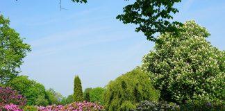 giardini parma cura verde